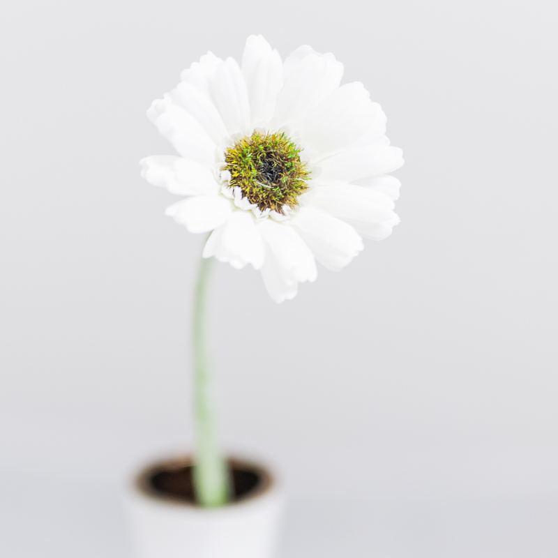 Silk Gerbera Daisy Flower White